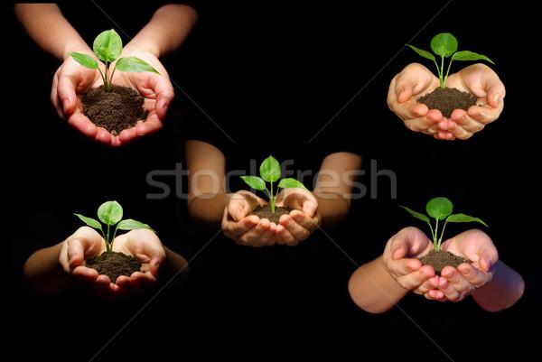 Stock fotó: Növény · kezek · fekete · kéz · természet · levél