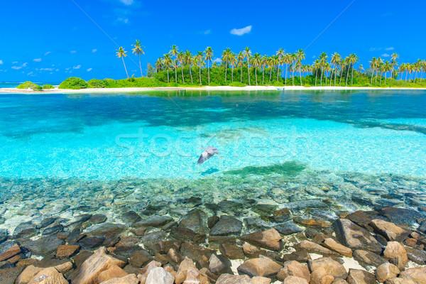 tropical beach in Maldives Stock photo © Pakhnyushchyy