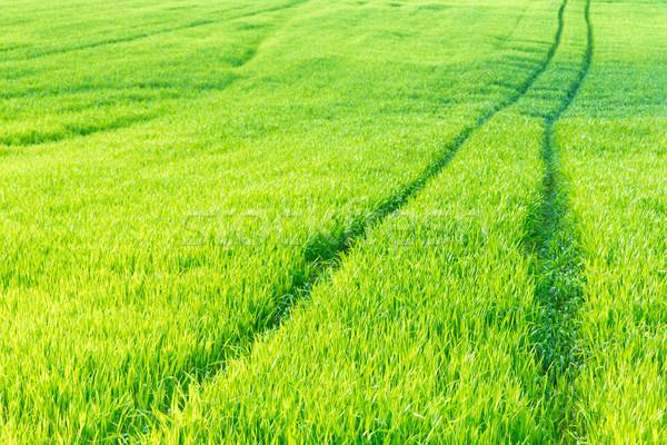 трава текстуры области завода ветер газона Сток-фото © Pakhnyushchyy