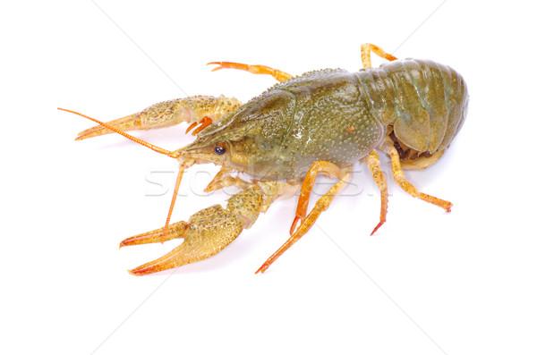 crawfish  Stock photo © Pakhnyushchyy