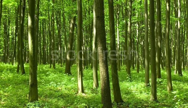 Bomen adembenemend zon bos mistig Stockfoto © Pakhnyushchyy