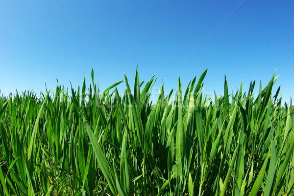 lawn on sky Stock photo © Pakhnyushchyy
