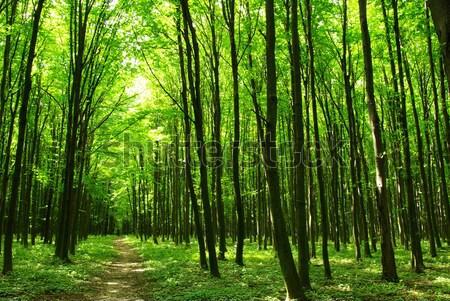 Erdő kora reggel nap zöld szépség növények Stock fotó © Pakhnyushchyy