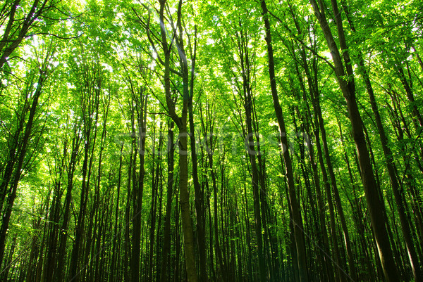 Stock photo: green forest