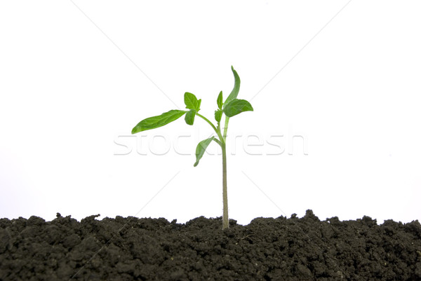 plant Stock photo © Pakhnyushchyy