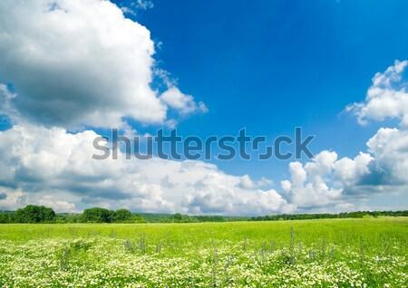 フィールド 青空 春 草 自然 芝生 ストックフォト © Pakhnyushchyy