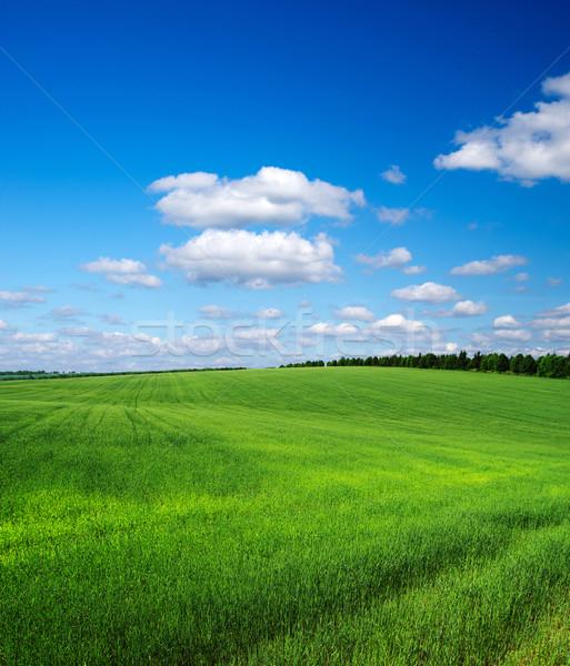 Vert domaine ciel bleu printemps herbe nature Photo stock © Pakhnyushchyy