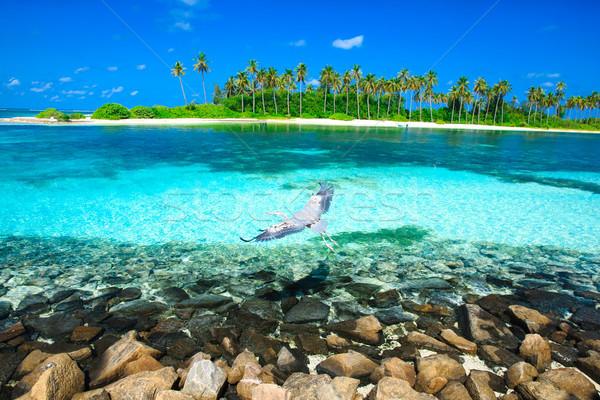 красивой пляж воды природы пейзаж морем Сток-фото © Pakhnyushchyy