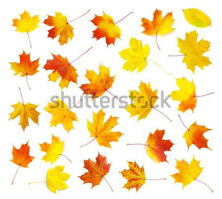 autumn  leafs Stock photo © Pakhnyushchyy