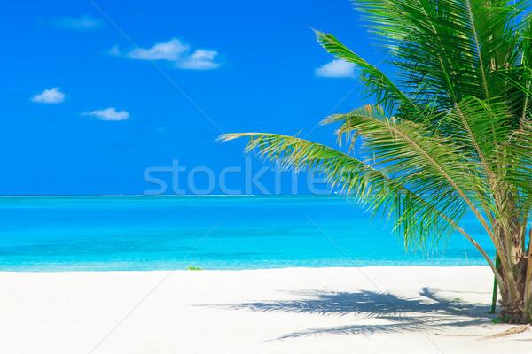 海 白 熱帯ビーチ ヤシの木 青 ストックフォト © Pakhnyushchyy