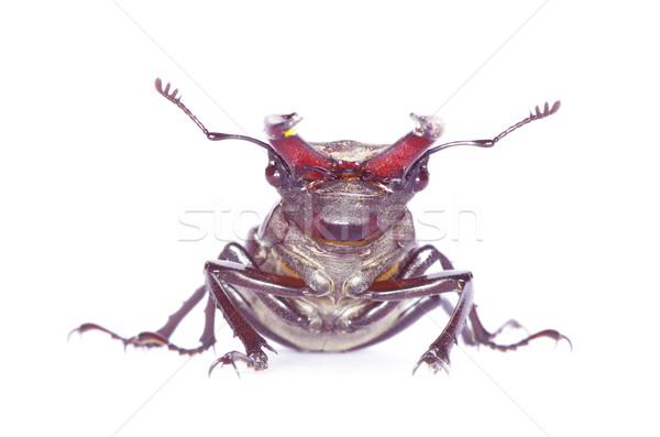 beetle Stock photo © Pakhnyushchyy
