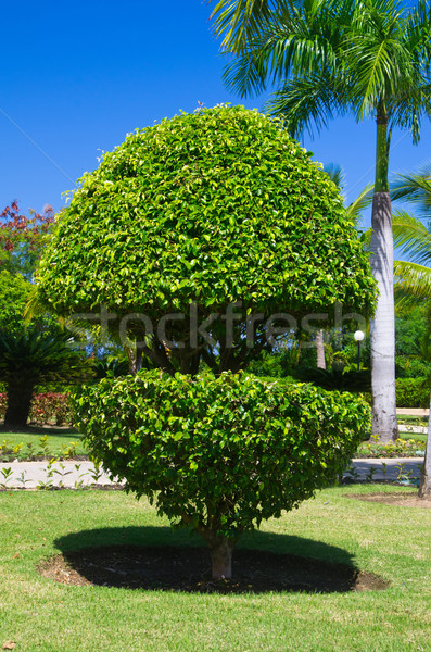 tree Stock photo © Pakhnyushchyy