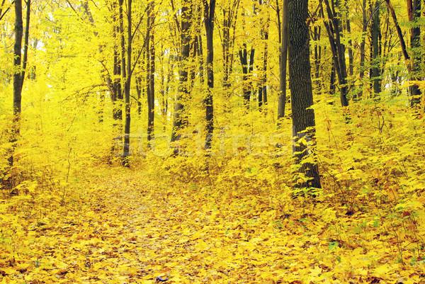 Foto d'archivio: Autunno · foresta · natura · giardino · sfondo