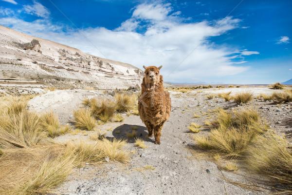 Céu cara natureza fazenda vida animal Foto stock © Pakhnyushchyy