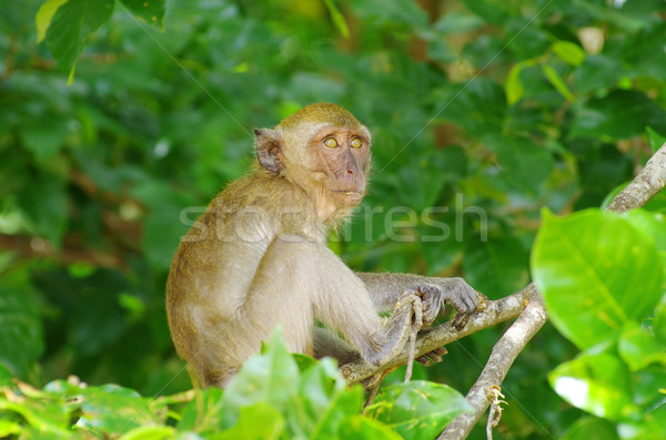 monkey Stock photo © Pakhnyushchyy