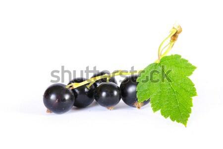 black currant Stock photo © Pakhnyushchyy