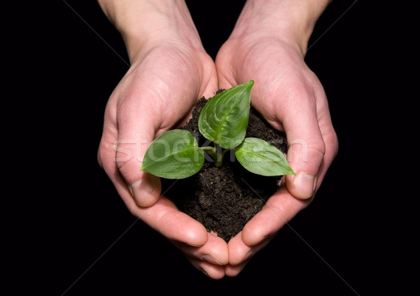 Hands holding sapling in soil Stock photo © Pakhnyushchyy