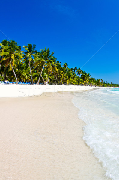 beach and tropical sea Stock photo © Pakhnyushchyy
