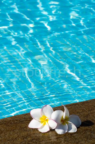 Flores flor tropical piscina flor natureza espaço Foto stock © Pakhnyushchyy