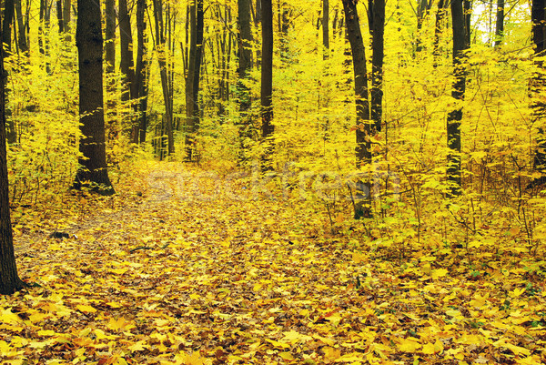 Sonbahar orman doğa bahçe arka plan Stok fotoğraf © Pakhnyushchyy