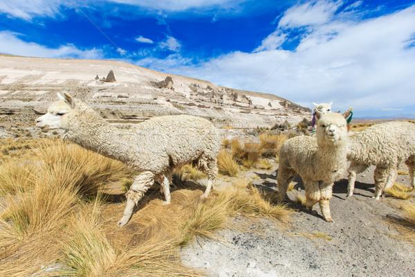 égbolt arc természet farm élet állat Stock fotó © Pakhnyushchyy