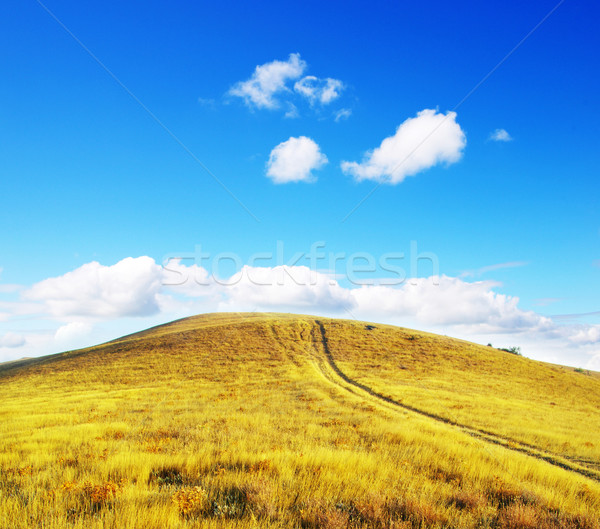 mountain meadow Stock photo © Pakhnyushchyy