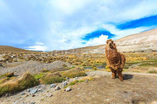 Hemel natuur landschap groep boerderij portret Stockfoto © Pakhnyushchyy