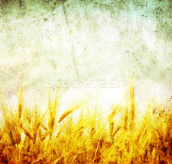 wheat Stock photo © Pakhnyushchyy