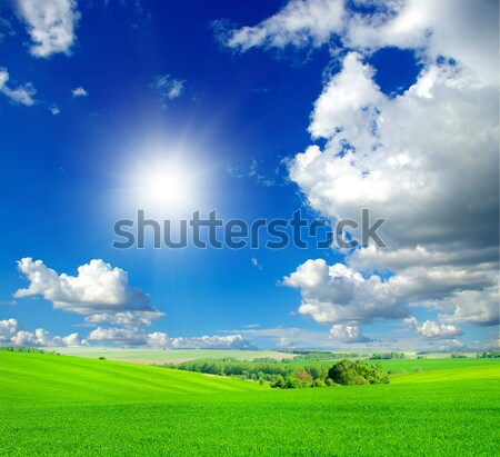 Verde campo blue sky primavera grama natureza Foto stock © Pakhnyushchyy