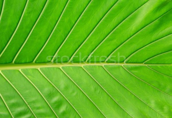 Yaprak yapı doğal soyut hayat bitki Stok fotoğraf © Pakhnyushchyy