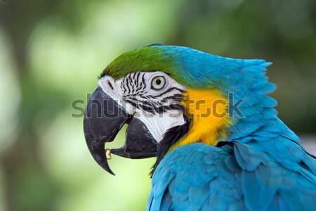 parrot bird Stock photo © Pakhnyushchyy