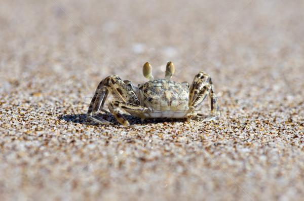 Krab strandzand strand natuur dier milieu Stockfoto © Pakhnyushchyy