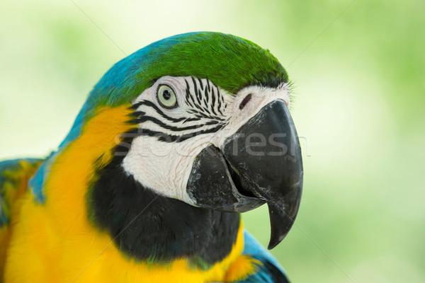 macaw  Stock photo © Pakhnyushchyy