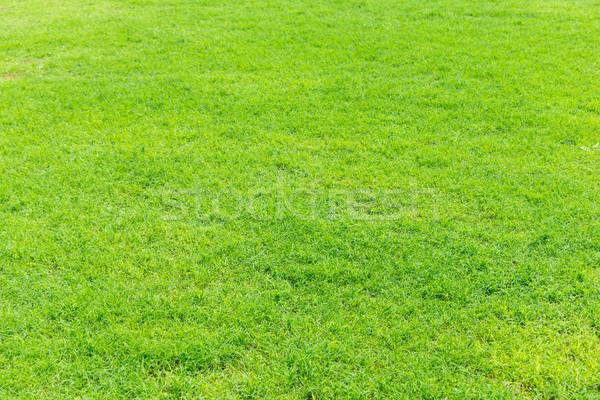 grass texture from a field Stock photo © Pakhnyushchyy