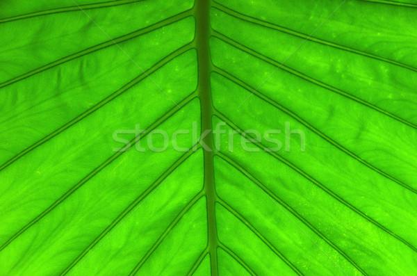 Zöld levél textúra absztrakt természet egészség háttér Stock fotó © Pakhnyushchyy
