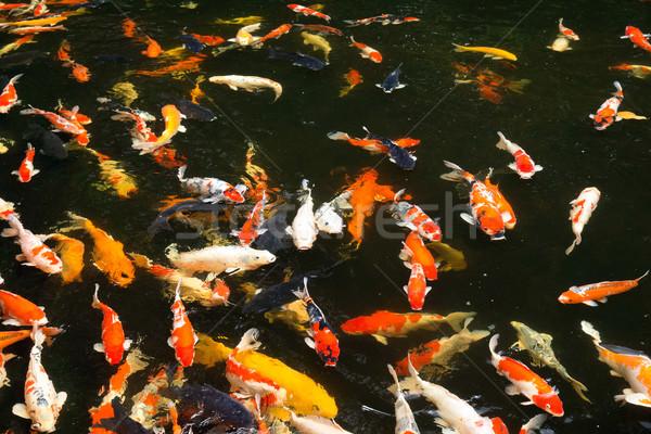 Zwemmen water voedsel mond meer vlees Stockfoto © Pakhnyushchyy