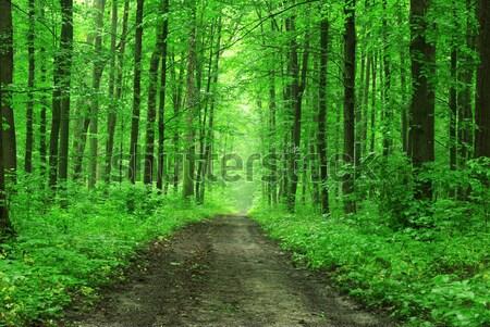 Verde foresta percorso luce estate sunrise Foto d'archivio © Pakhnyushchyy