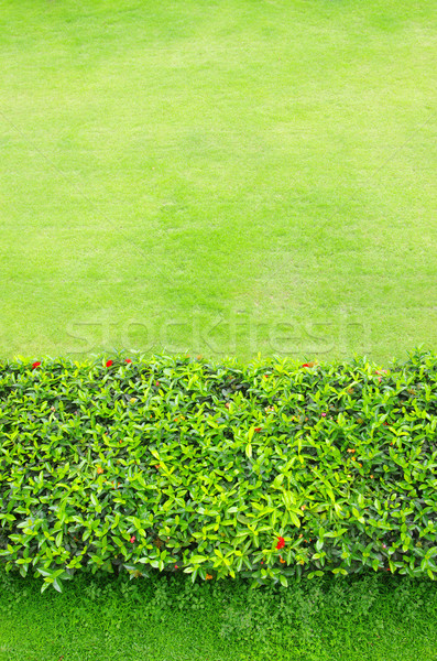 green grass Stock photo © Pakhnyushchyy