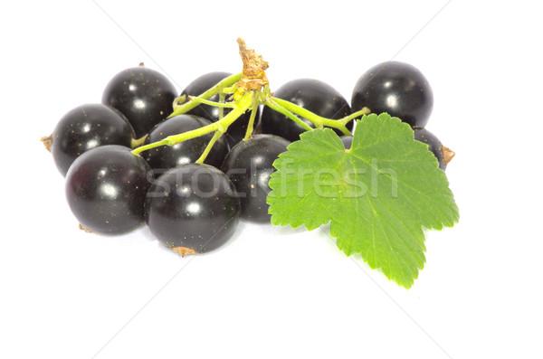 Siyah frenk üzümü şube meyve yalıtılmış beyaz Stok fotoğraf © Pakhnyushchyy