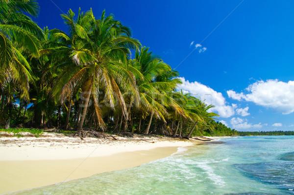 Tropischen Meer Karibik Strand Wasser Hintergrund Stock foto © Pakhnyushchyy
