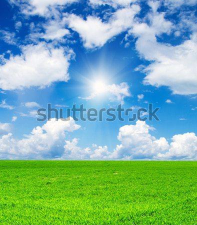 ストックフォト: ヒマワリ · フィールド · 曇った · 青空 · 花 · ファーム