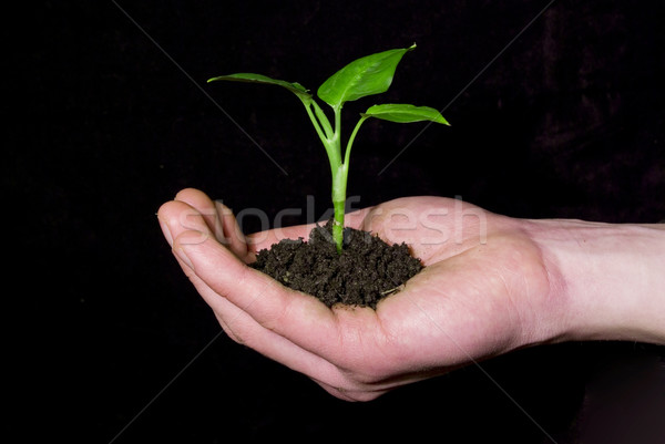 plant in hand Stock photo © Pakhnyushchyy