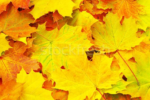 Foglia d'acero texture abstract vita autunno impianto Foto d'archivio © Pakhnyushchyy