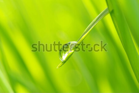 drop on grass  Stock photo © Pakhnyushchyy