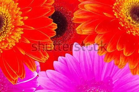 Színes közelkép virág tavasz természet növény Stock fotó © Pakhnyushchyy