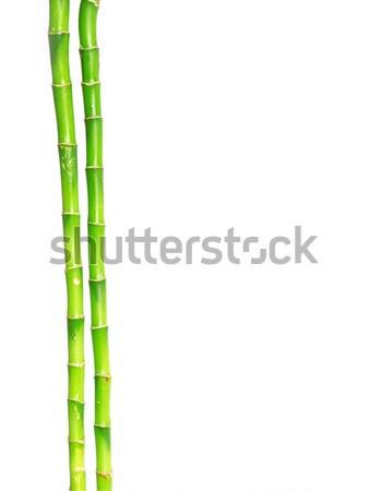 Bambu yalıtılmış beyaz yaprak yeşil bitki Stok fotoğraf © Pakhnyushchyy