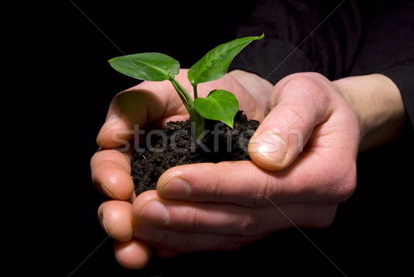 Manos árbol joven suelo mano luz Foto stock © Pakhnyushchyy