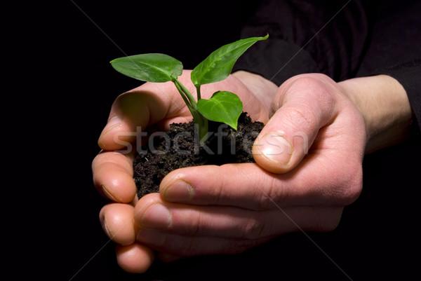 Stock photo: Hands holding sapling