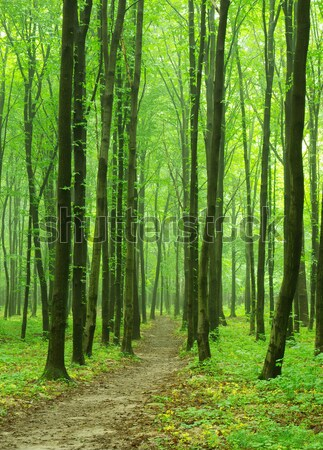 forest background  Stock photo © Pakhnyushchyy