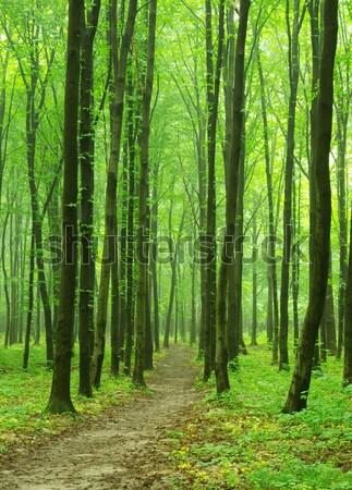 Erdő zöld napos idő levél nyár szín Stock fotó © Pakhnyushchyy